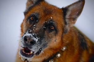 Zoe-in-Snow-12-15-13