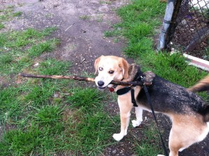 Belle stick