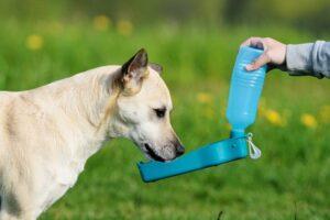 dog drinking water 2