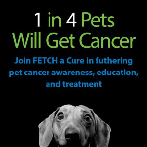 FETCH a Cure Donations