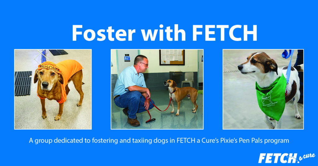 "A graphic showing three Pen Pals dogs and the words ""Foster with FETCH"""