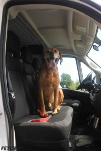 Bear, a Pen Pals dog, sitting in the front seat of the FETCH van