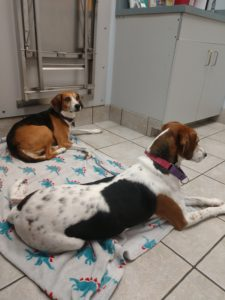 Cora, a Companions in Crisis recipient, and her cousin Dixie at her appointment.